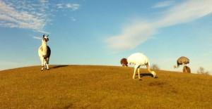 FR Sky with Llama